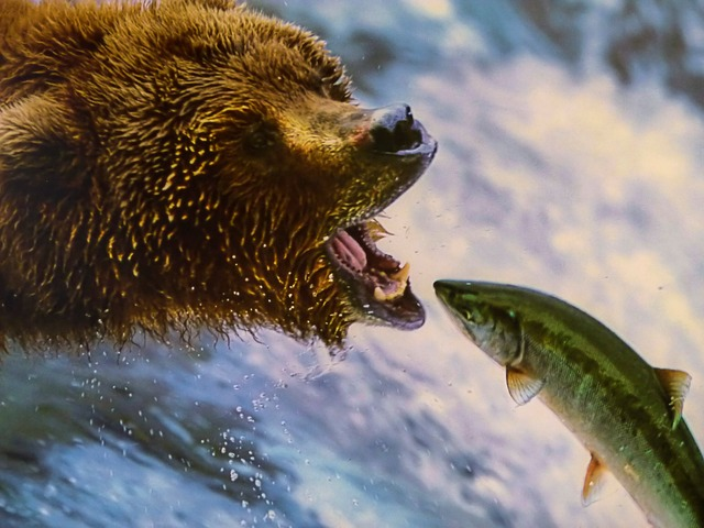 Salmon. It's a protein so the picture is kind of relevant. Did you know farmed salmon has higher content than wild? I'd still stick with wild though.